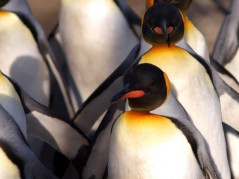 Penguin update Google